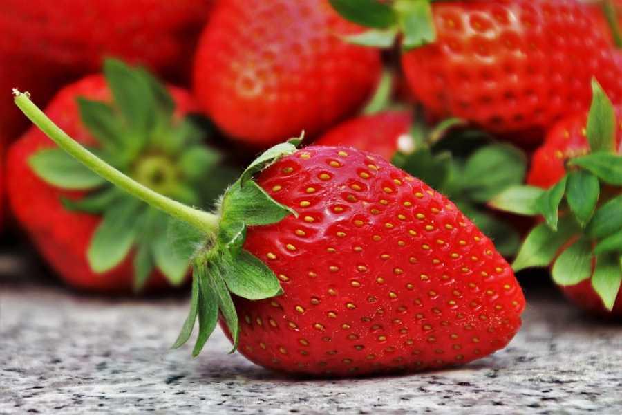 Kim's M & T SE02 Strawberry Picking Tour 2019