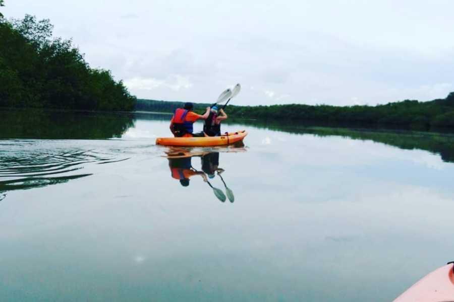 Uvita Information Center Mangrove Kayaking tour from Uvita