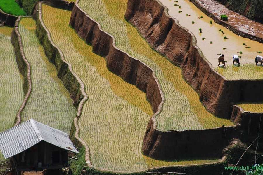 Viet Ventures Co., Ltd Photography tour - Rice terrace Vietnam 4 days