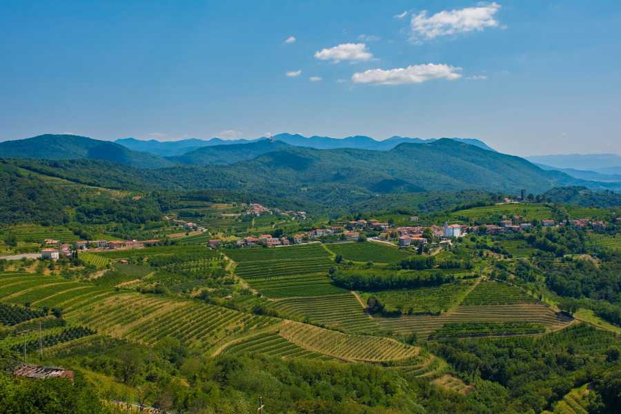 Nature Trips Slovenia, Food&Wine Experience -  Private Tour