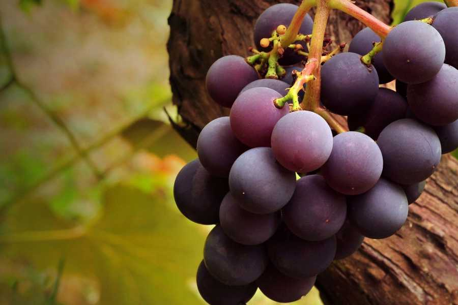 Grekaddict Thessaloniki Full-Day Wine and Gastronomy Tour
