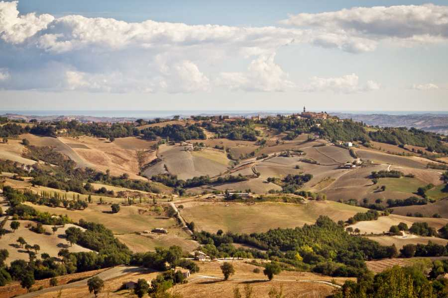 "UmbriaMarche In the ""cocci"" workshop - Laboratory&Tasting"