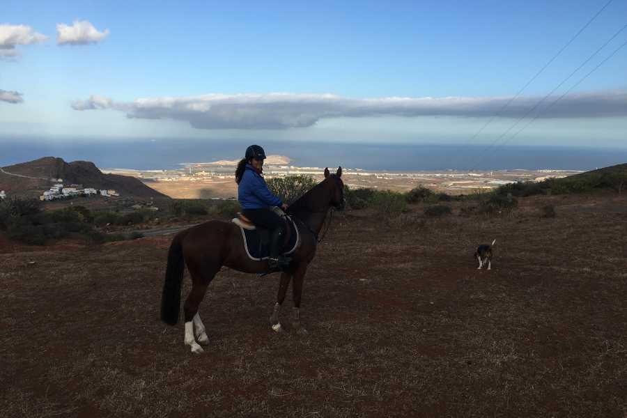 Hipica Canaria Passeggiata di 2 ore: Montagna!