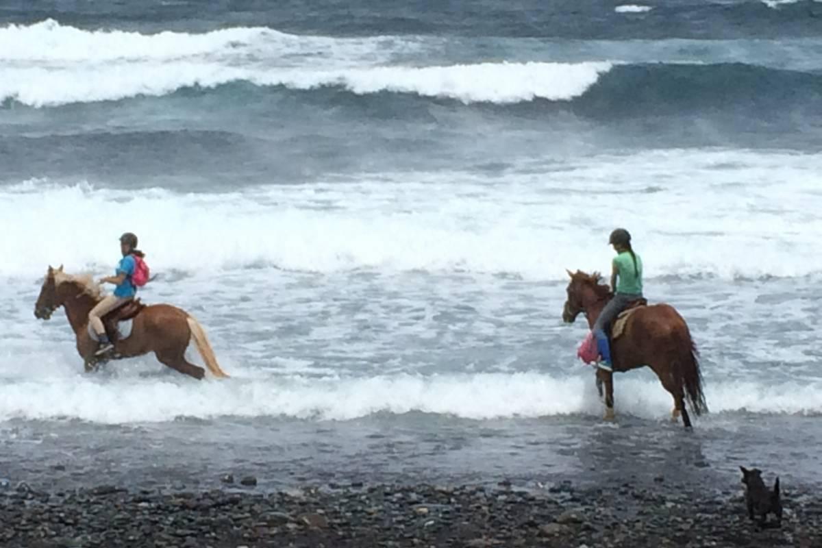 Hipica Canaria Ruta a caballo de 4 horas: a la Playa