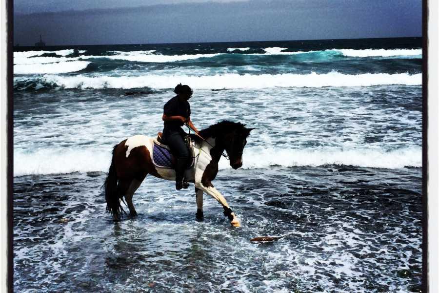 Hipica Canaria Passeggiata a cavallo alla spiaggia: 4 ore