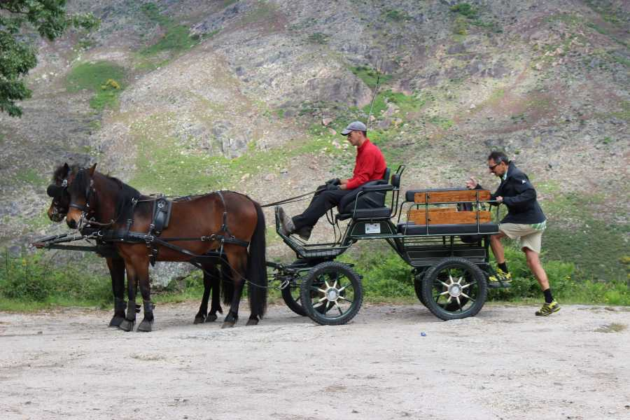 Gerês Equidesafios Horse Drawn Carriage Tour