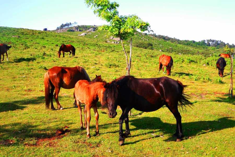 Gerês Equidesafios Trilho do Castelo - 1 Dia a Cavalo