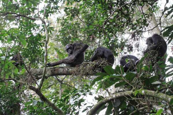 10 Day Rwanda: Primate Safari