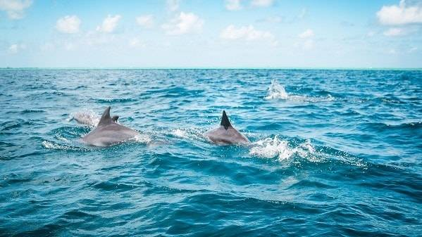 Dolphin Watching with Lunch at Benitier Island