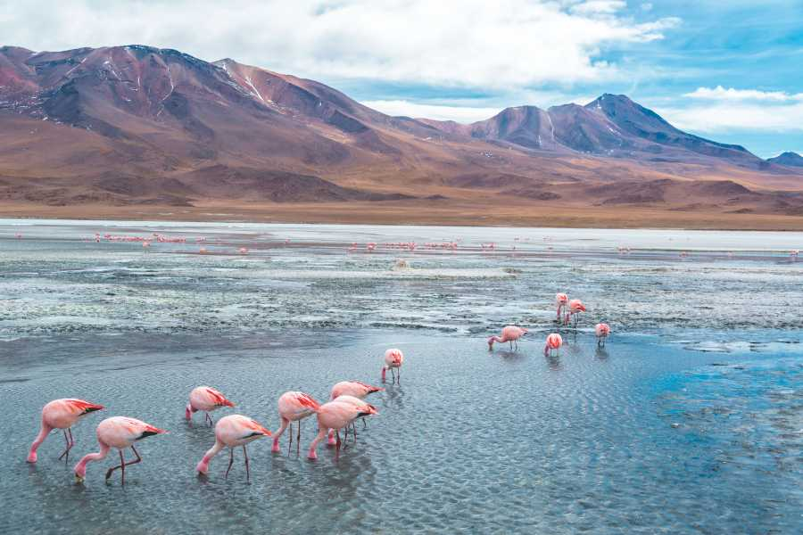 Uyuni Expeditions FULL DAY LAGUNAS ANDINAS - UYUNI 1D
