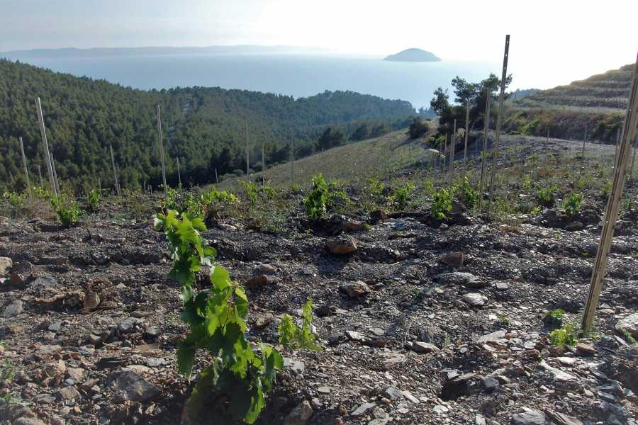 Grekaddict Kefalonia Half-Day Wine and Vineyard Tour