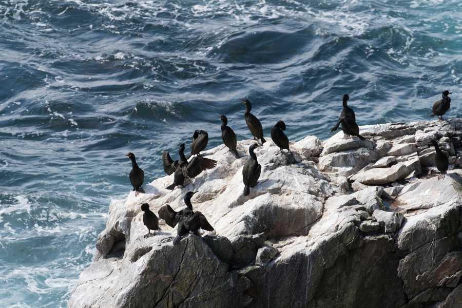 Runde Miljøsenter AS Sel og sjøfuglsafari