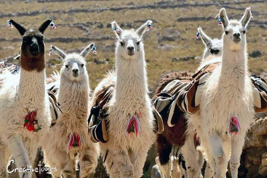 Uyuni Expeditions HOTÉIS ÚNICOS TUPIZA – UYUNI 4D (TEMPORADA SECA)