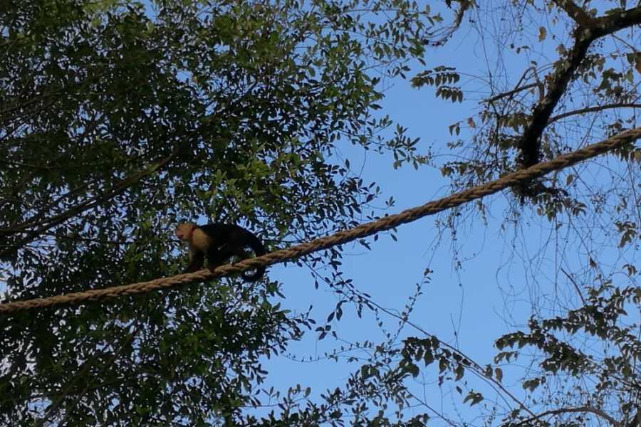 Uvita Information Center Rainforest Experience - Hike in the Hacienda Barú