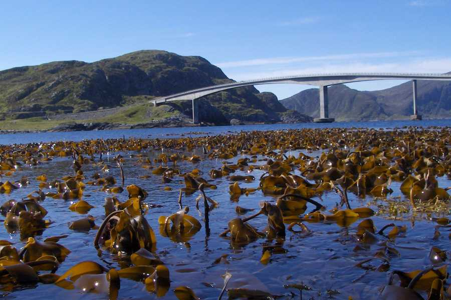 Runde Miljøsenter AS Guided Seaweed experience along the coast
