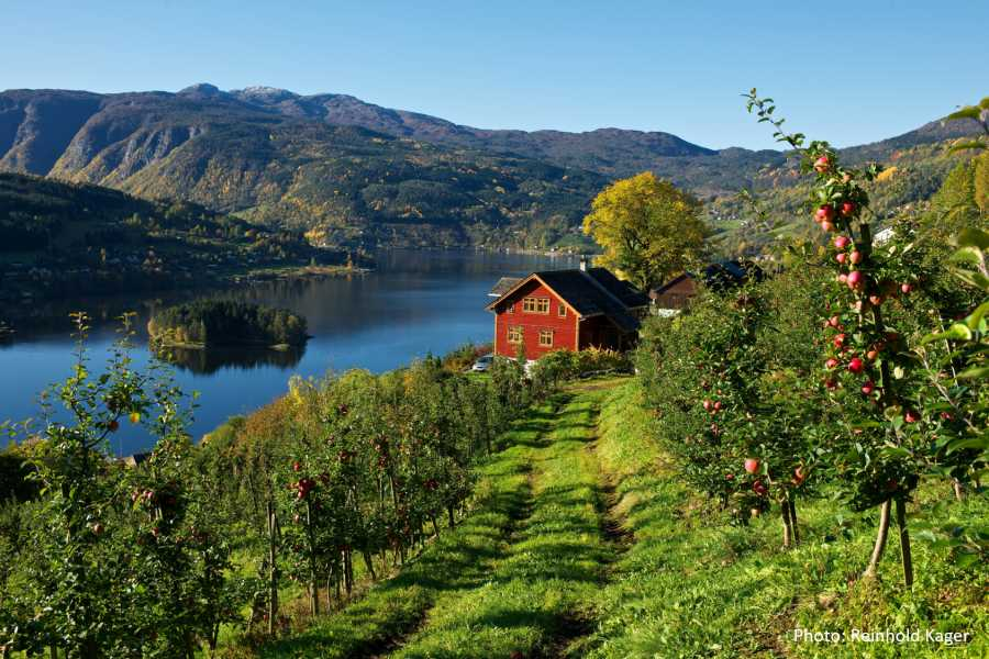 Travel like the locals VISIT THE BEAUTIFUL VILLAGE OF ULVIK