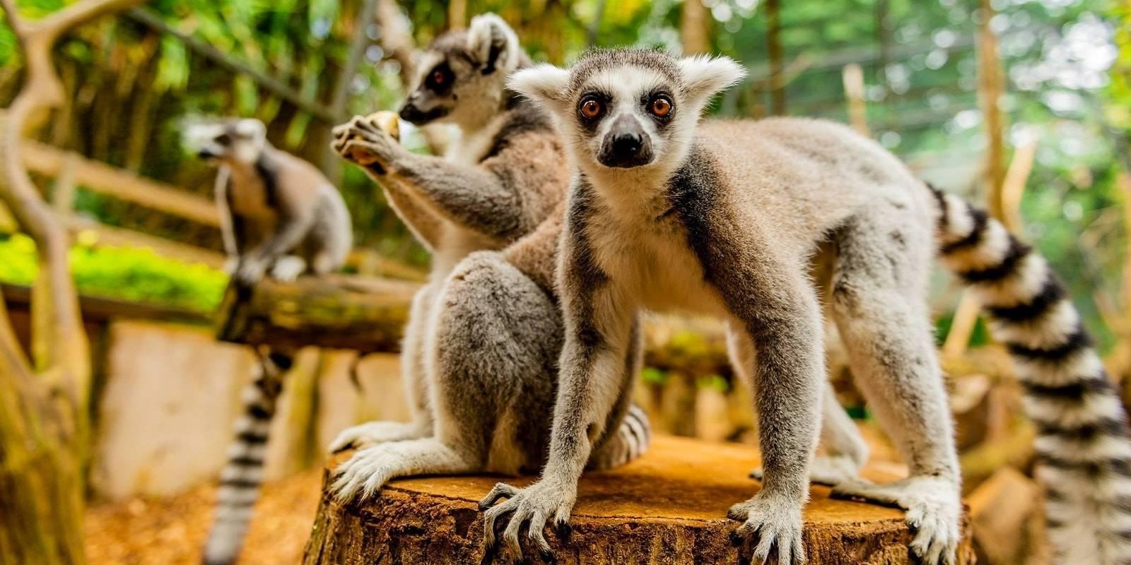 La Vanille Nature Park in Mauritius