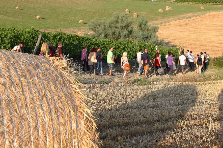 Promozione Alberghiera Trekking in the vineyards and olive grove, visit to the winery and tasting