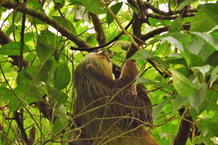 Tour Guanacaste Spider Monkey Canopy Tour