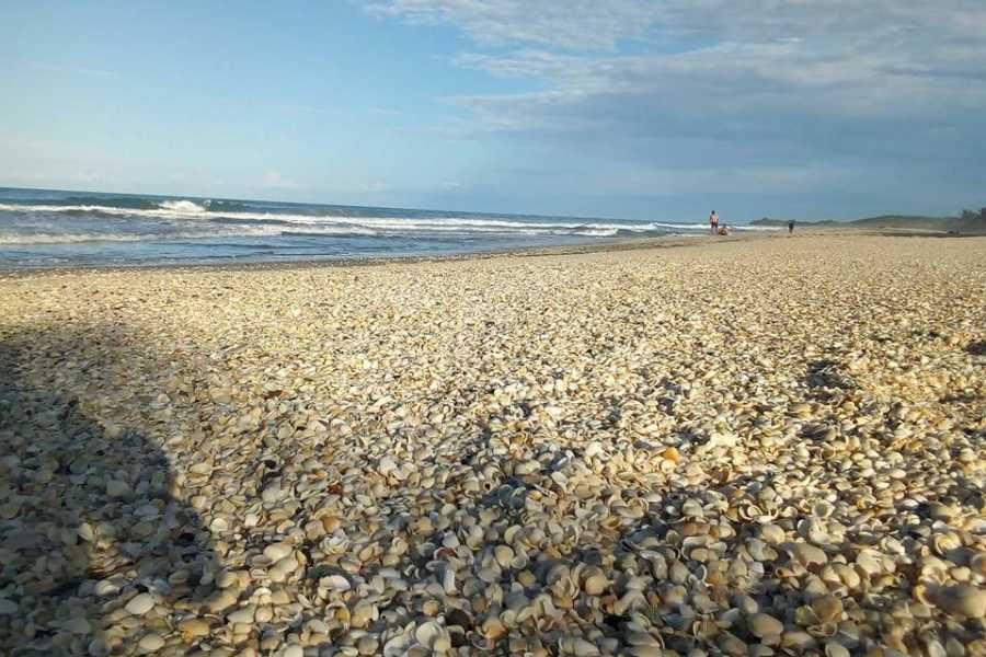 Tours y Tickets Operador Turístico Playas con Aroma a Vainilla - Paquete 5 días y 4 noches en Papantla