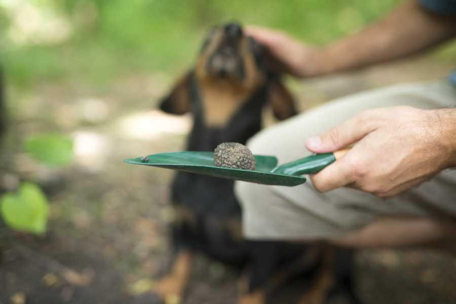 ToDoInSlovenia, brand of Kompas d.d. Premium tour to Slovenian Istria - Truffle hunting