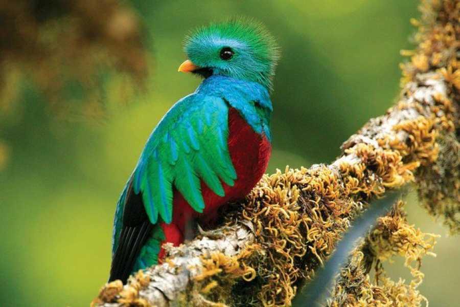 Tour Guanacaste Rincon de la Vieja Bird Watching