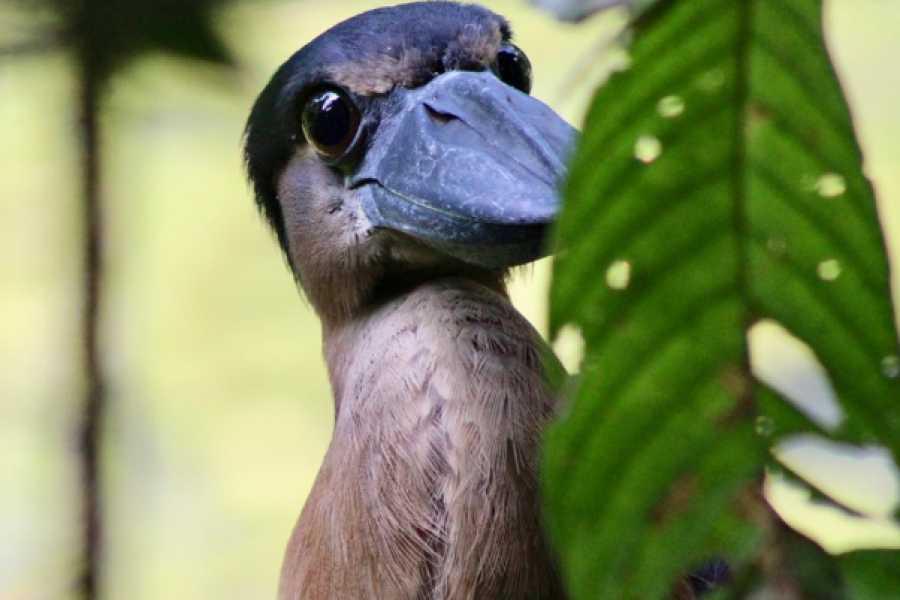 Tour Guanacaste Arenal Volcano Bird Watching Experience