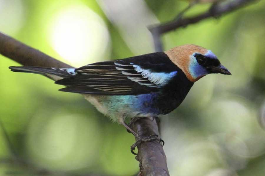 Tour Guanacaste Arenal Volcano Bird Watching Experience