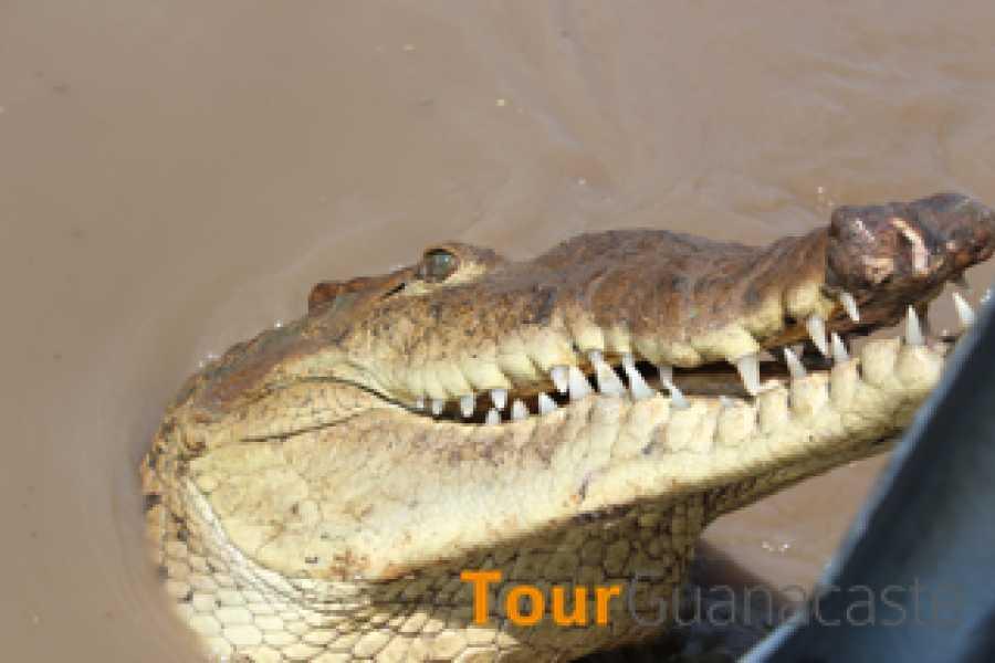 Tour Guanacaste Palo Verde Sugar Mill & Cultural Tour