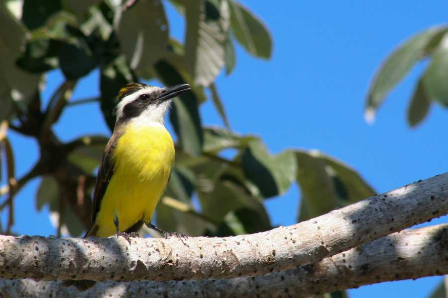 Tour Guanacaste Palo Verde and Coffee Tour