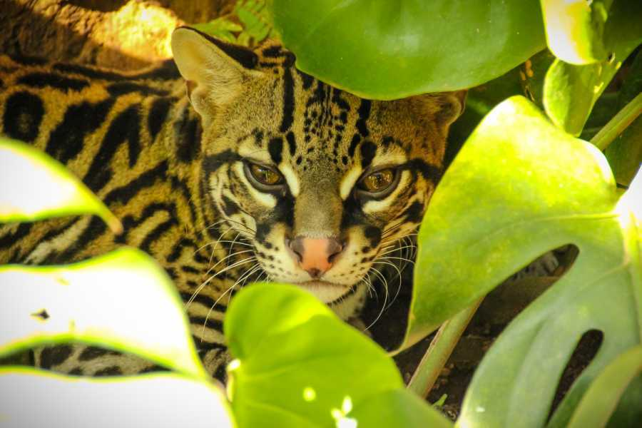 Tour Guanacaste Nature Package Costa Rica
