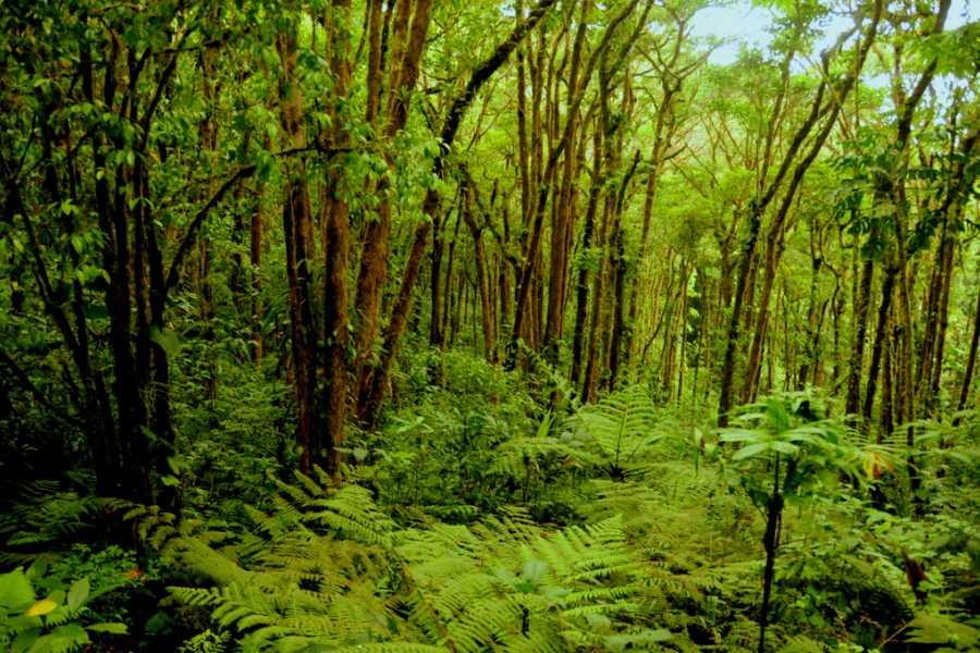 Tour Guanacaste Overnight Monteverde Forest