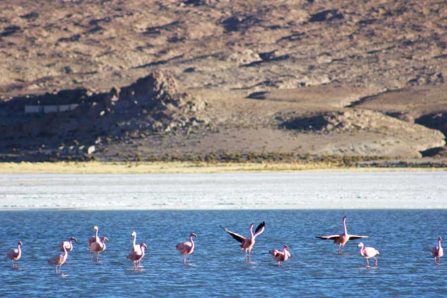 Uyuni Expeditions UNIQUE HOTELS TUPIZA-ATACAMA 4D (DRY SEASON)