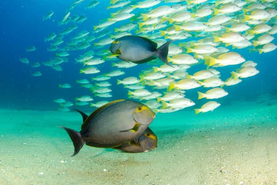 Tour Guanacaste Beach launch Snorkel Tour