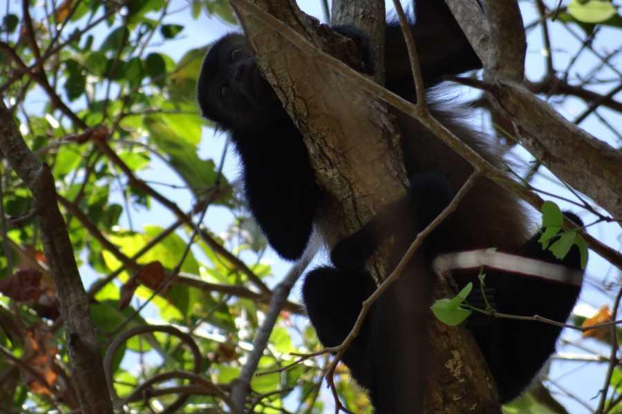 Tour Guanacaste Volunteer at Monkey Park Foundation