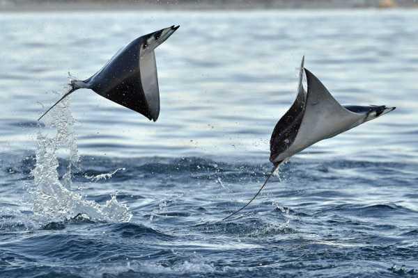 """""""Aqualord"""" Ocean Safari Boat Tour"""