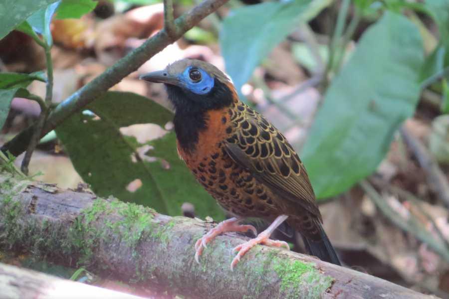 Tour Guanacaste Birdwatching in Santa Rosa National Park