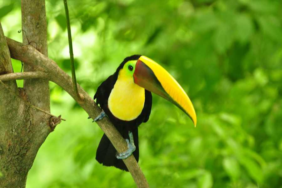 Krain Concierges Bird Watching & Culture