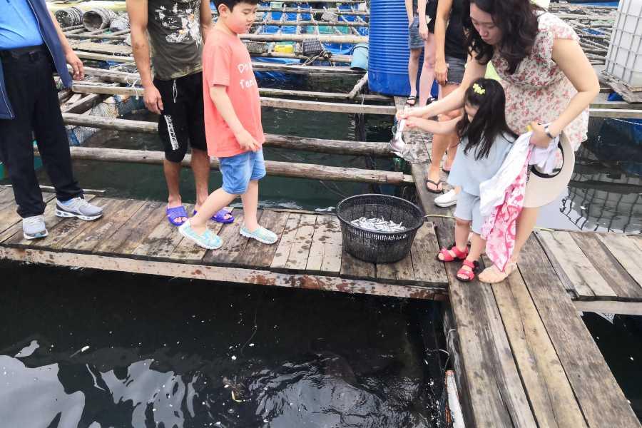 Friends Travel Vietnam Genesis Regal Cruise   3D2N Ha Long Bay