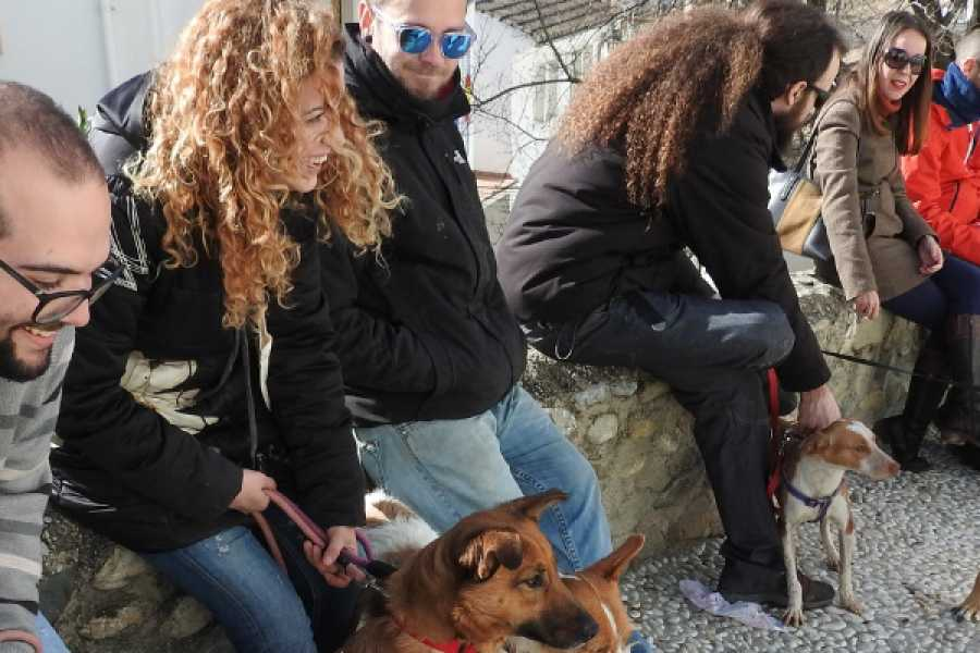 Balea Travel Realejo Tour with your pet