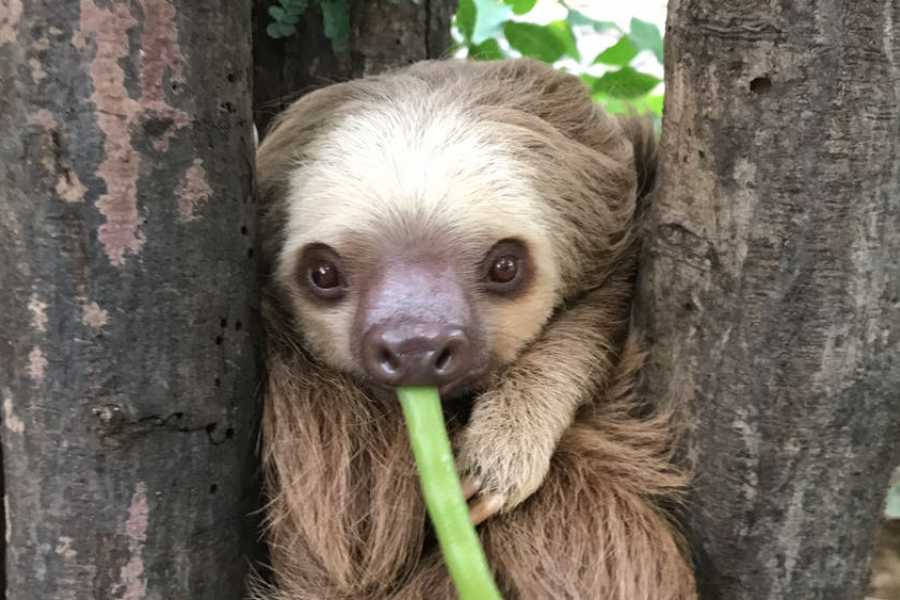 Lizard Tours ATV - Sloths at Adventure Park