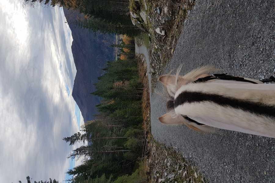 Norsk Fjordhestsenter Rideturar til Utsikten