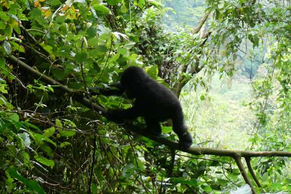 18 Day African Gorilla Tour & Savannah Safari