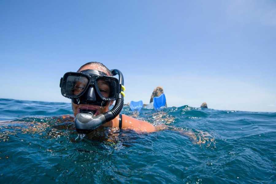 Lizard Tours Snorkeling Catalina's Island