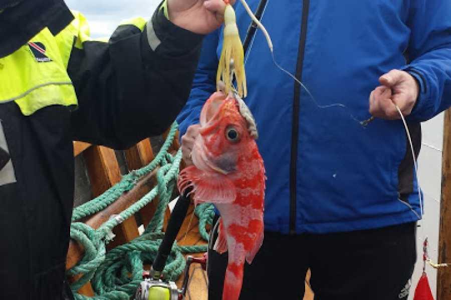 Fishing Stavanger Private charter/MS RAPP  (4 hr Deep Water Fishing Summer Season 25 July (14:00 - 18:00)