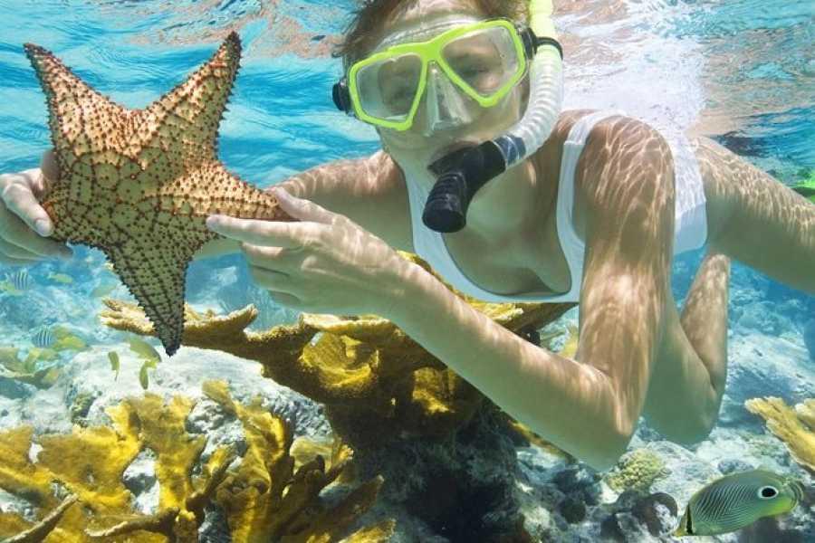 Journey To Egypt Tiran Island Snorkeling Tour