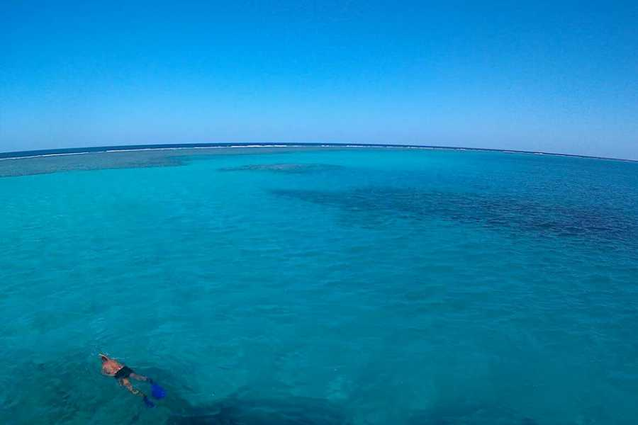 Marsa alam tours Diving trip to Satayh Dolphin Reef  from Marsa Alam