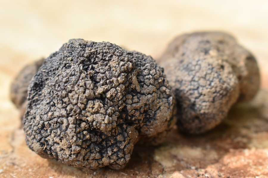 UmbriaMarche Guided Tour & Truffle Tasting - Walking between art, knowledge and flavors