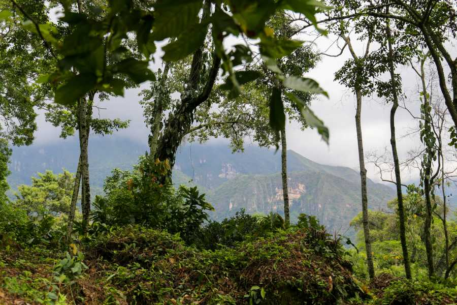Andes Ecotours Chocolate & Coffee Farm Experience U$110