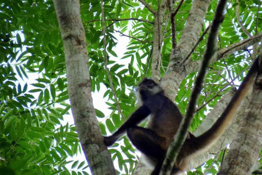 Gem Trips 03:45 Tikal Tour de Amanecer en grupo pequeño desde Hotel La Casa de Don David